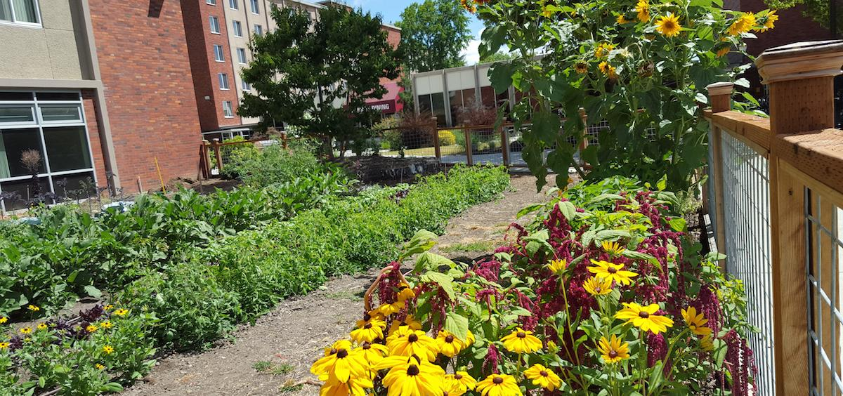 OSU Local Food Garden