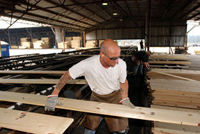 Jeff Lauderdale sorts pine lumber at the Rough & Ready Lumber Co. mill