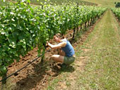 Girl working on grape vines in vineyard