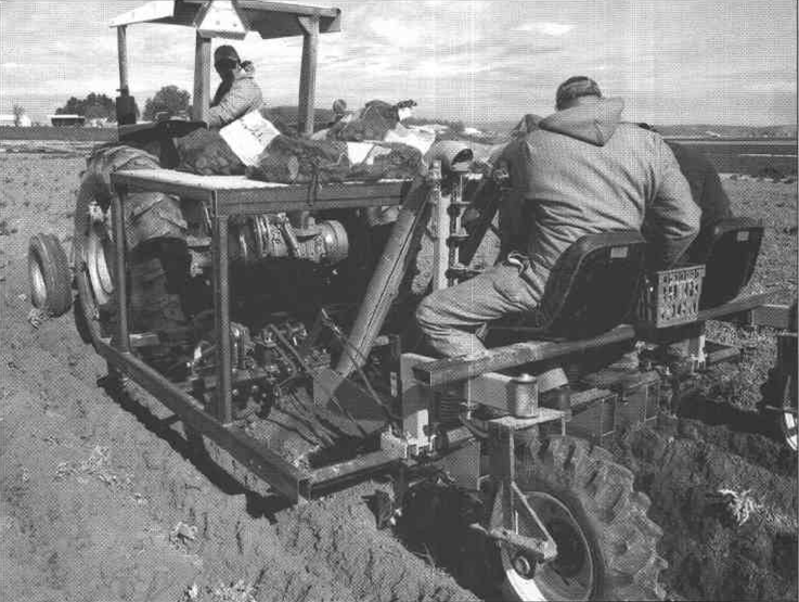 Station Bioscience Technicians Monty Saunders and Eric Eldgridge, planting potatoes at varying plot densities at the Malheur Experiment Station.