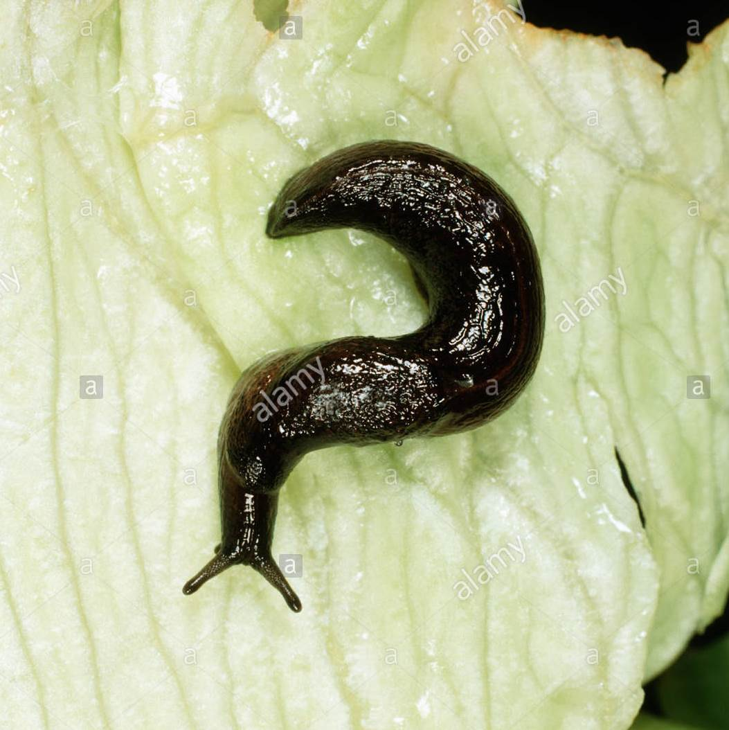 Slug in the shape of a question mark
