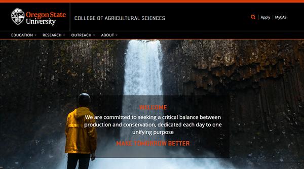 New College website