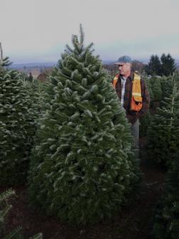 Chal Landgren On A Christmas Tree Farm