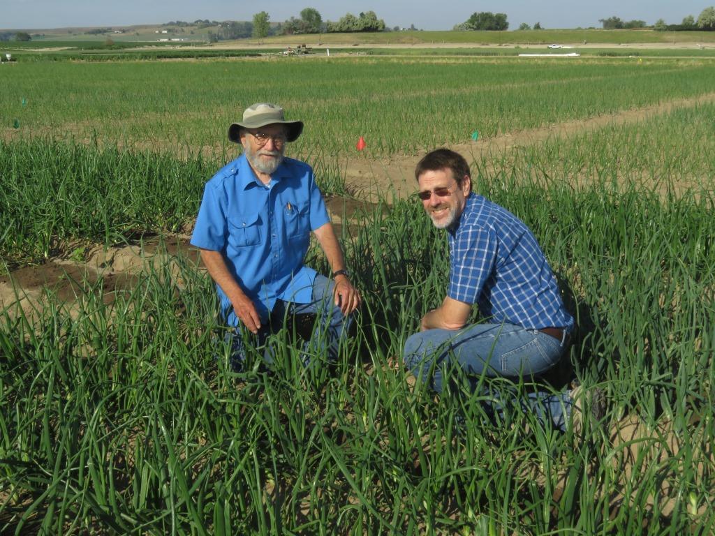 Clint Shock and Stuart Reitz in an onion field