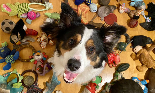 A dog and her toys
