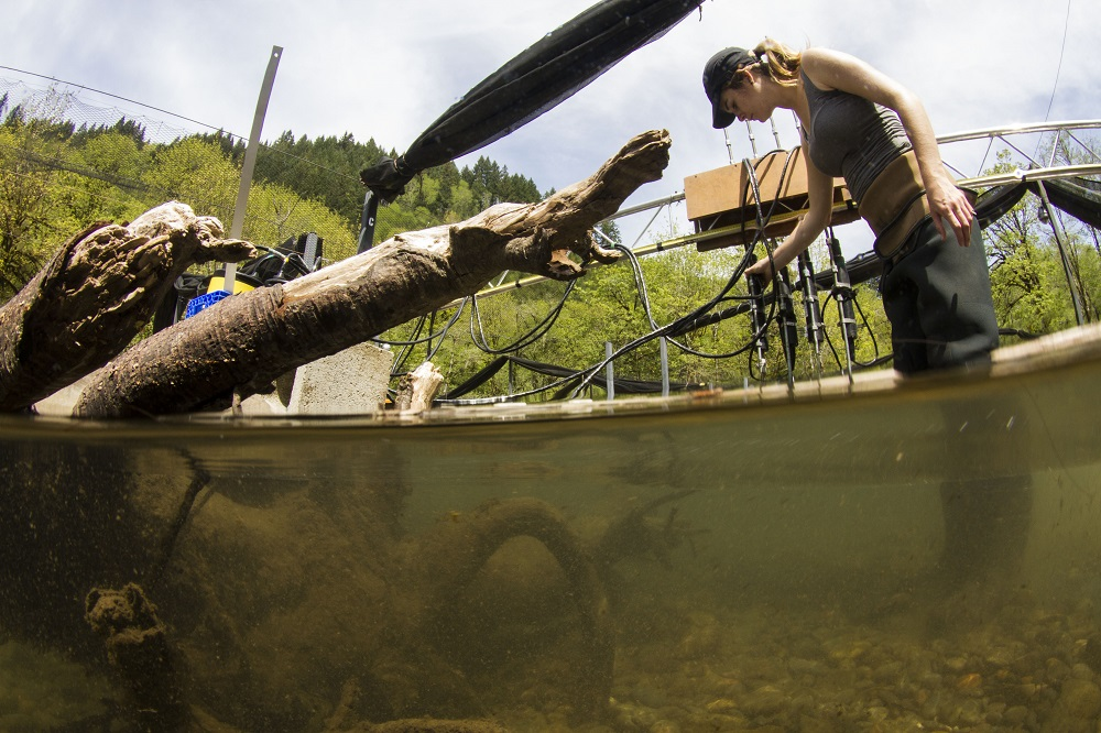 Ecological Engineering Senior, Tessa Hanson takes fine-scale velocity measurements with four Acoustic Velocimeters in an experimental channel at the Oregon Hatchery Research Center.