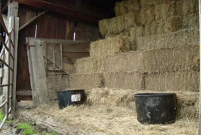Low quality grass hay and protein tubs could provide a proper ration for some classes of livestock.