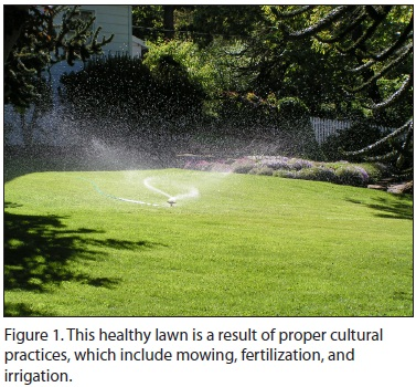 Figure 1. This healthy lawn is a result of proper cultural practices, which incl