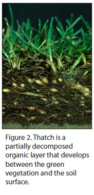 Figure 2. Thatch is a partially decomposed organic layer that develops between t