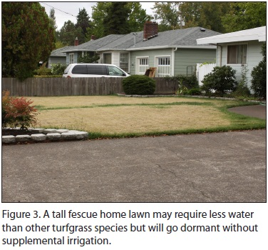 Figure 3. A tall fescue home lawn may require less water than other turfgrass sp