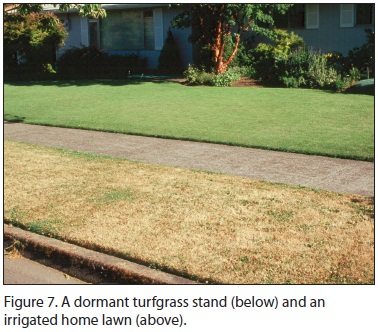 Figure 7. A dormant turfgrass stand (below) and an irrigated home lawn (above).