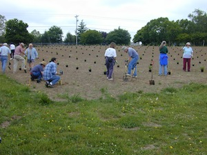 Planting the evaluation, June 2004