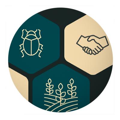 IPM Summit 2020 honeycomb banner