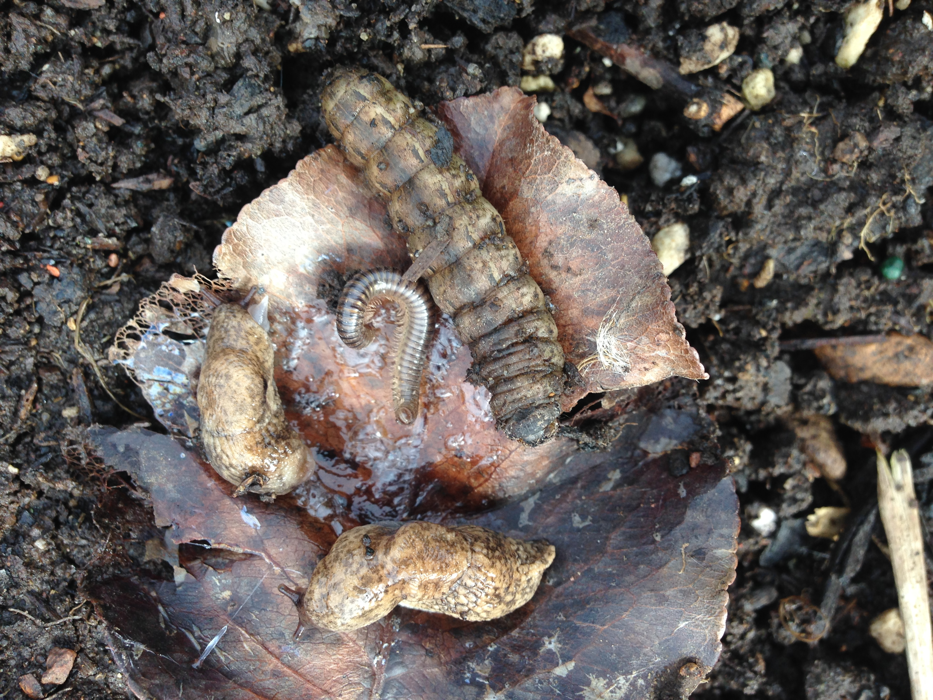 Millipedes, Slugs, and Cutworms! Oh my!