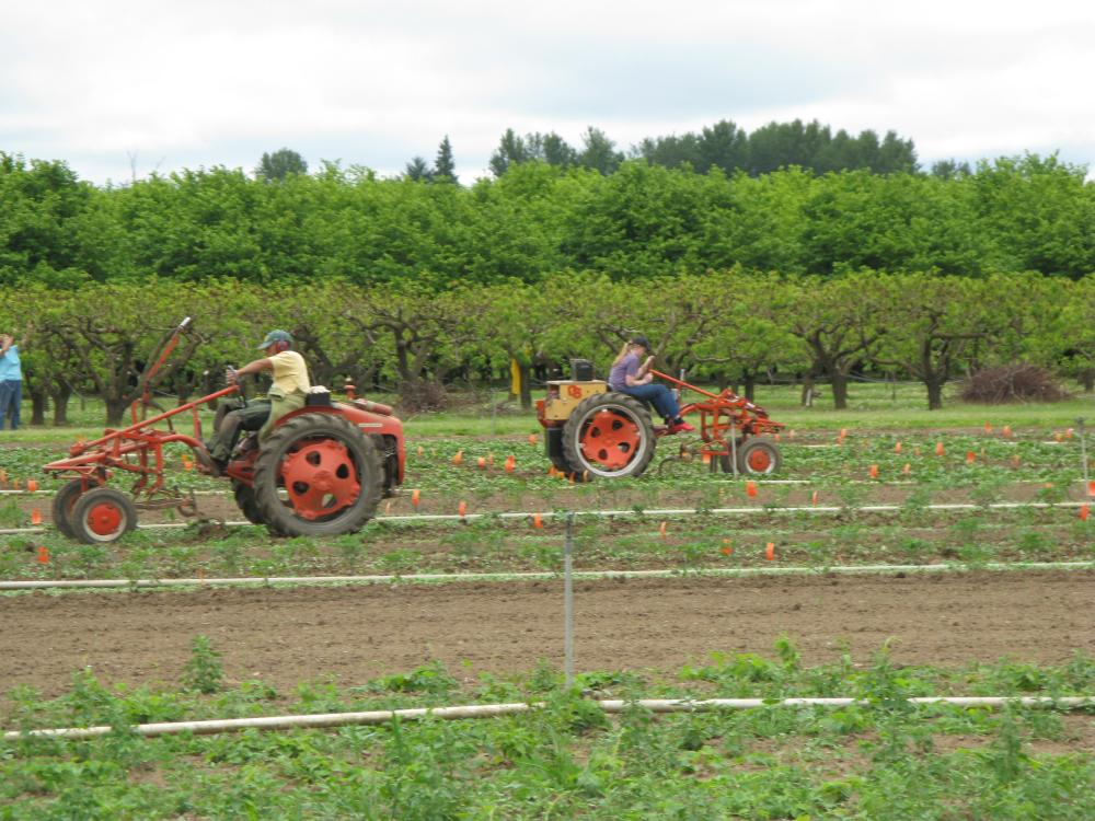 Small John Deere >> Vegetable Breeding   College of Agricultural Sciences   Oregon State University