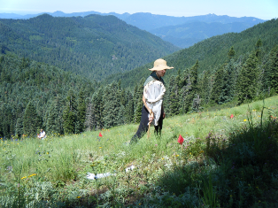 Students sample plants and pollinators in montane meadows of the HJ Andrews Experimental Forest.