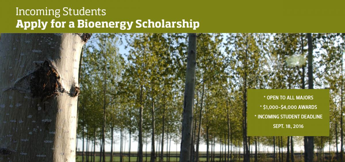 Image of Polar trees with annoucement of bioenergy scholarship