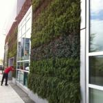 Green Wall, Whole Foods Market