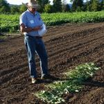 Dr. Jim Myers, illustrating bean genetic differences
