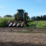 Kneagy Family Farms harvesting corn