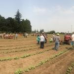 Precision cultivation of vegetables workshop