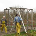 Building the pollination cage