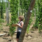 Emily evaluating hop trials. Photo courtesy of: Randy Hopson