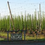 Hops Yard. Photo courtesy of: Randy Hopson