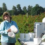 Weighing Marionberries. Photo courtesy of: Randy Hopson