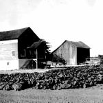 Beach Farm House 1954