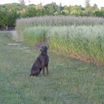 Dobe the farm dog. Photo courtesy of: Randy Hopson