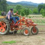 Cultivating Beans. Photo courtesy of: Randy Hopson