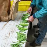 Grading beans