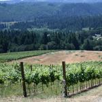Vineyard, July 2009