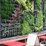 Green Wall, Singer Hill Cafe, Portland, OR