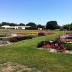 Annual Variety Trials at the Oak Creek Center for Urban Horticulture