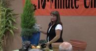 Master Gardener 10 Minute University-Fall and Winter Container Gardening