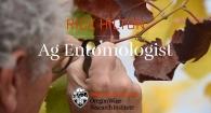 Rick Hilton, Ag Entomologist