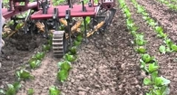 Alternative cultivators for organic vegetable production