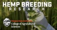 OSU Hemp Breeding