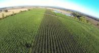 Developing Hybrid Poplar as a Biofuel Feedstock
