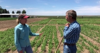 Dr. Paul Carter and ProGene discuss peas, protein, and soil acidity