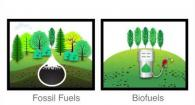 Making Biofuels and Biochemicals from Poplar Trees