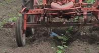 Filled-Furrow Squash Cultivator: Weed Em and Reap