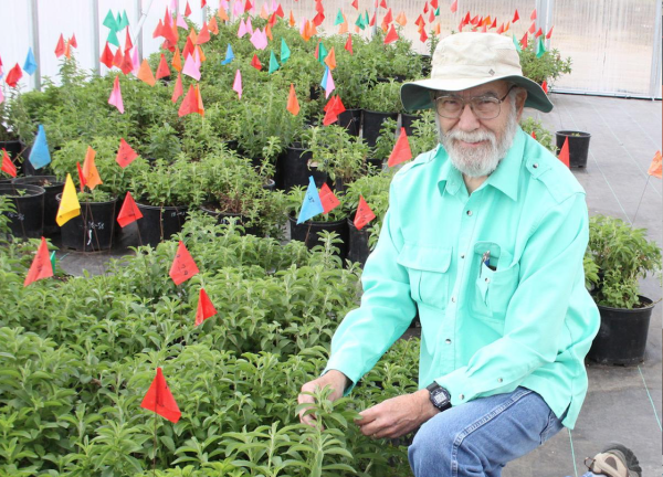 Emeritus Professor Clint Shock kneels next to young plants in a greenhouse
