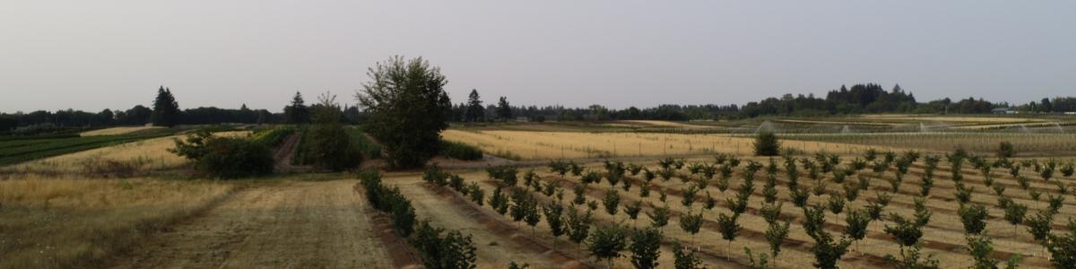 Hazelnut trees photographed using UAS