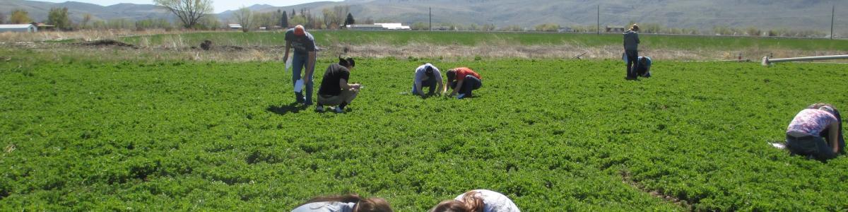 Crop soil sciences college of agricultural sciences for Soil 205 oregon state