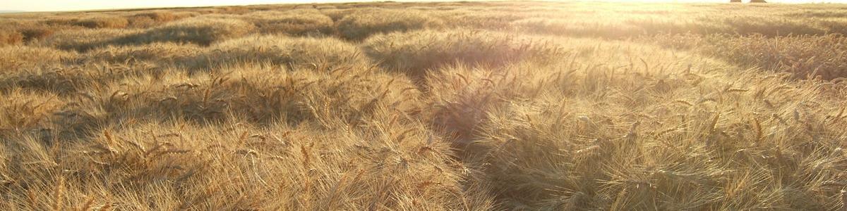 Looking towards the sun in Eastern Oregon