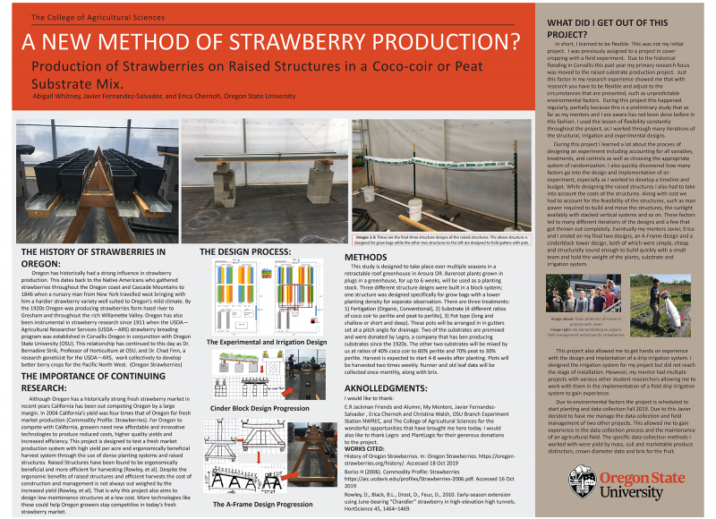 Abigail Whitney: A New Method of Strawberry Production? Production of Strawberries on Raised Structure in a Coco-coir or Peat Substrate Mix
