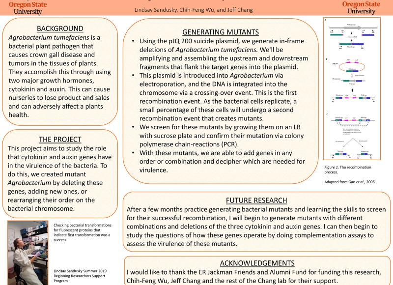 Lindsay Sandusky: Agrobacterium tumefaciens